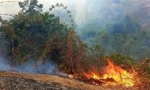 Quảng Nam: Lửa thiêu rụi hơn 10 héc ta rừng phòng hộ