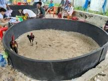 Quảng Nam: Triệt xóa tụ điểm đánh bạc bằng hình thức đá gà