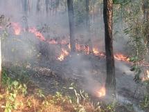 """Thừa Thiên Huế: Vật lộn với """"giặc lửa"""" tấn công rừng thông"""