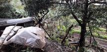 Xuống vườn phát cỏ, một cụ ông ở Gia Lai bị điện giật tử vong