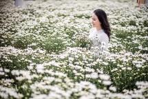 """Xuất hiện vườn cúc họa mi tuyệt đẹp """"check in"""" miễn phí ở Đà Nẵng"""
