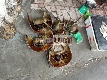 Bình Dương: Nghi ăn So biển, cả gia đình 6 người bị ngộ độc, bé gái 8 tuổi tử vong