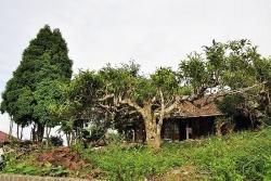 Yên Bái xây khu lưu trú không gian văn hóa Suối Giàng