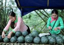 dua hau phu nilon ben re o ban vung cao lai chau