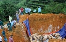 Yên Bái: Thêm huyện Văn Yên phát sinh dịch tả lợn châu Phi