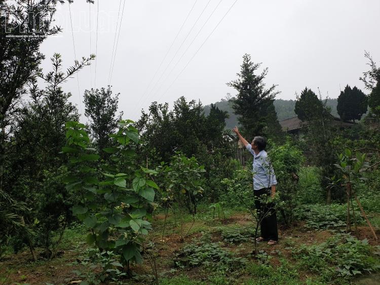 Người dân kêu cứu vì Công ty điện lực Yên Bái đền bù không thỏa đáng khi thi công đường điện cao áp