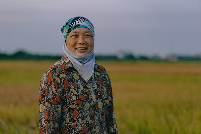 """Hà Nội: Nặng trĩu hạt lúa vàng giữa """"mùa Cô Vi"""""""
