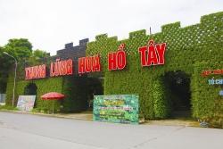 Chính quyền phường Nhật Tân buông lỏng quản lý tại Thung lũng hoa Hồ Tây