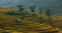 Phê duyệt dự án về du lịch trải nghiệm ruộng bậc thang Mù Cang Chải, Yên Bái