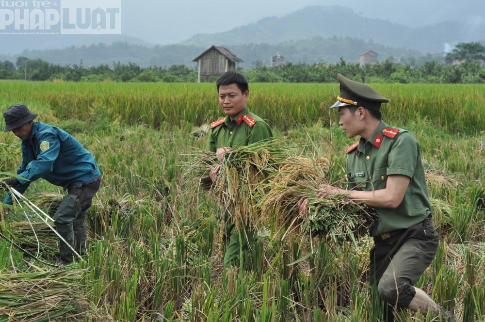 Chiến sĩ công an giúp dân gặt lúa ngày mùa