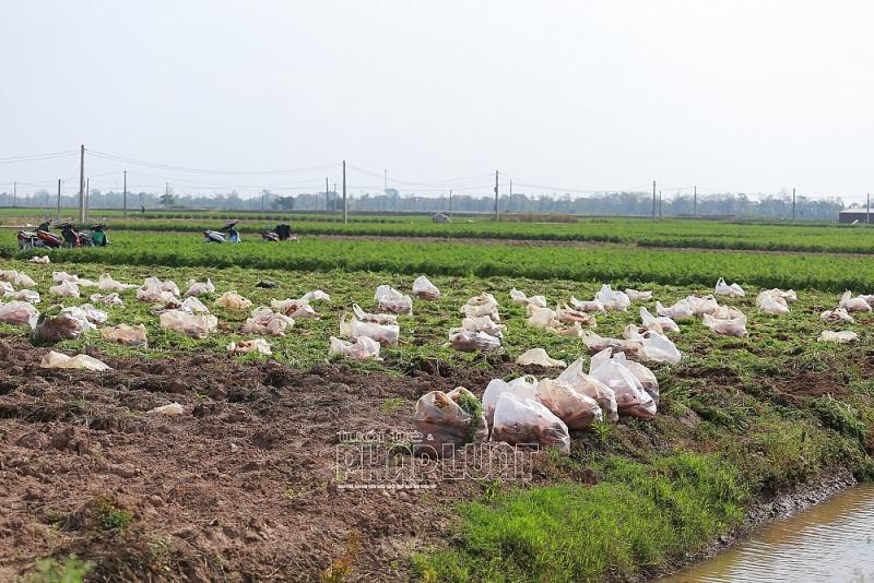 Hải Dương: Nông dân ra đồng sản xuất nông nghiệp phải có thẻ