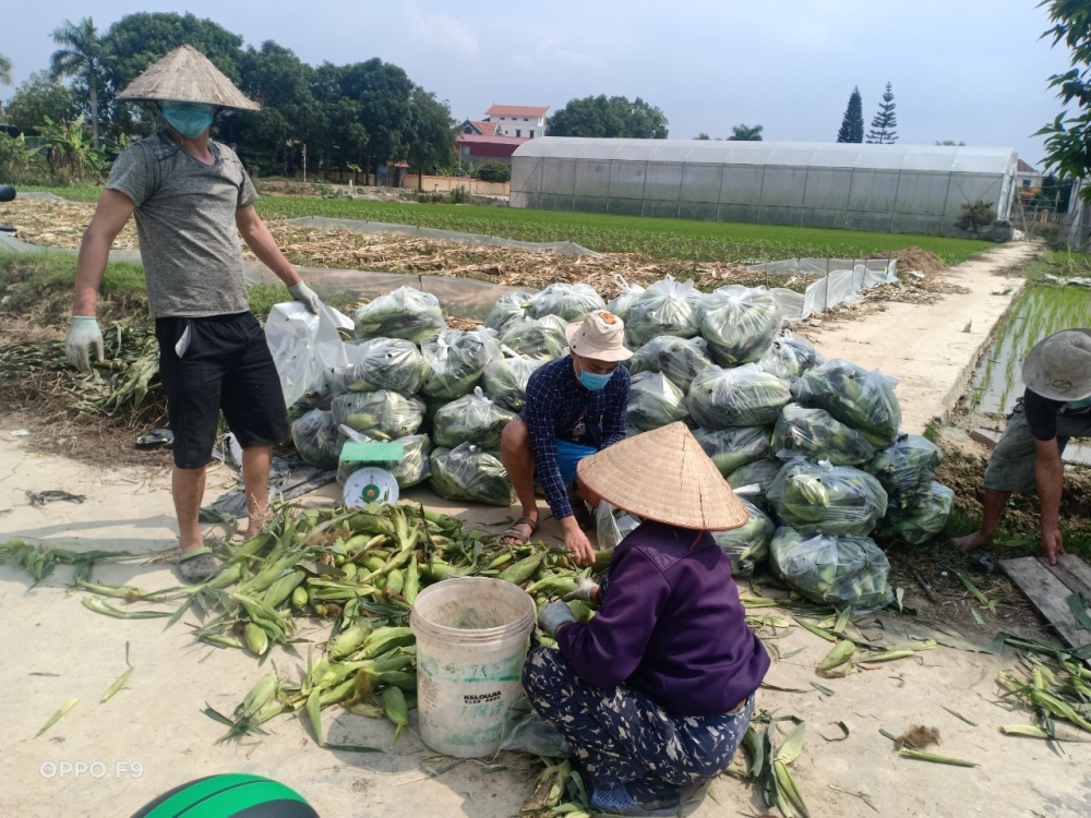 """Hội LHPN tỉnh Hải Dương nỗ lực """"giải cứu"""" nông sản"""