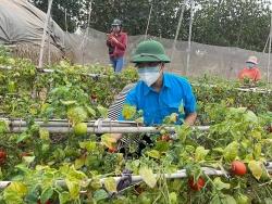 Tỉnh đoàn Hải Dương kết nối hỗ trợ tiêu thụ hàng trăm tấn nông sản
