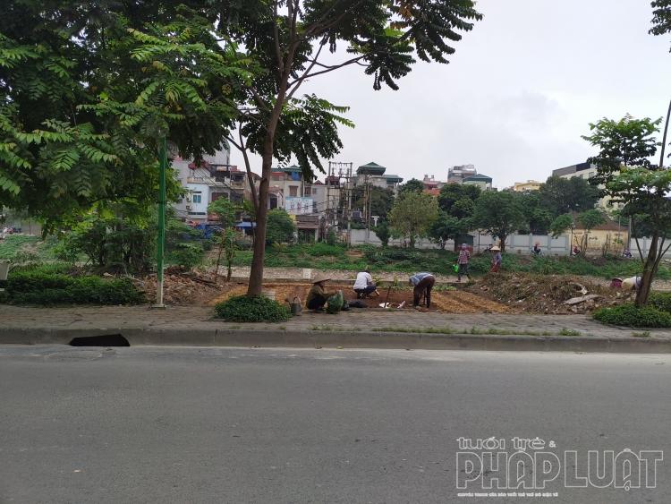 Nhiều người dân tự ý chiếm dụng bãi đất trồng cây xanh đô thị để trồng rau