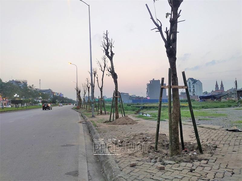 thay thế cây xanh trên đường trường chính HD