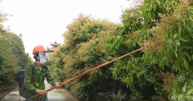 Hải Dương: Tạo điều kiện cho các thương lái, doanh nghiệp ra vào địa bàn thu mua nông sản