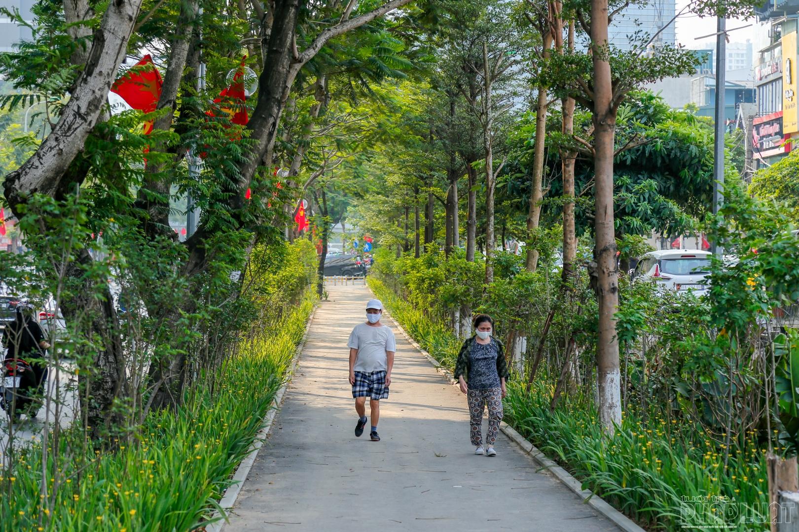 Xanh mướt đường đi bộ trên phố Thái Hà
