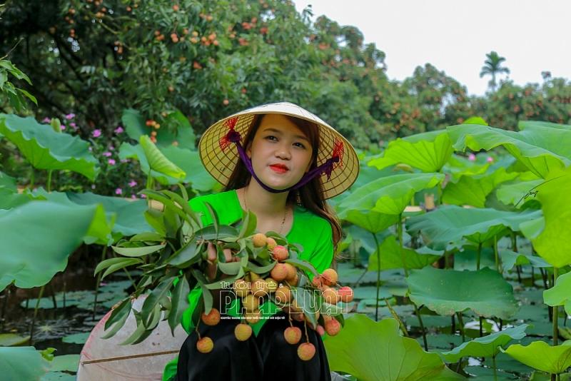 Hải Dương: Hấp dẫn du lịch trải nghiệm vườn vải thiều Thanh Hà