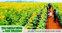 nghe an san sang cho le hoi hoa huong duong 2019