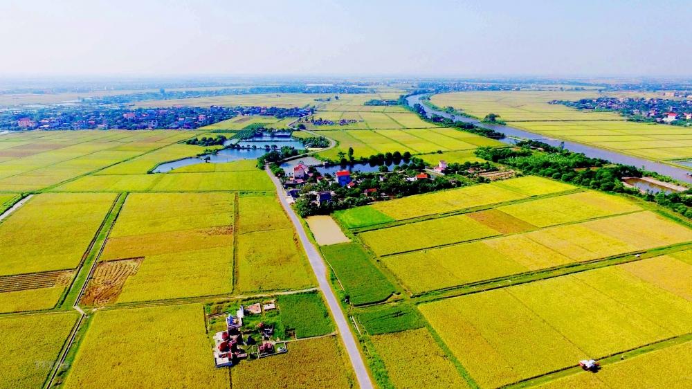 Hải Dương: Chuyển đổi mục đích sử dụng 11,68 ha đất trồng lúa