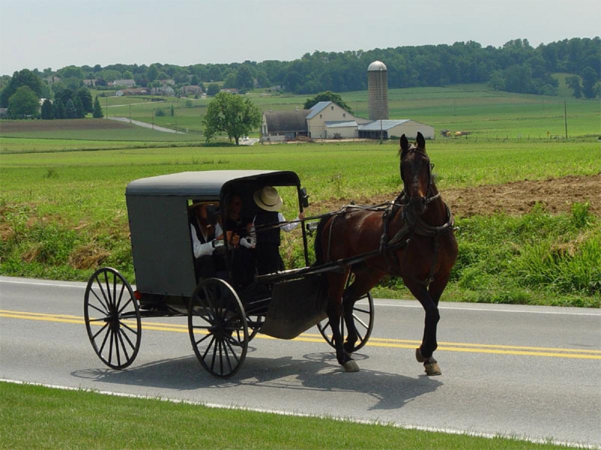 Người Amish chọn cách vận chuyển bằng ngựa để giữ cho cộng đồng ở địa phương có sự gắn kết hơn. Ảnh: Wikimedia