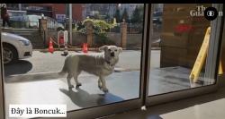 Cảm động con chó đợi chủ ngoài cửa bệnh viện suốt nhiều ngày