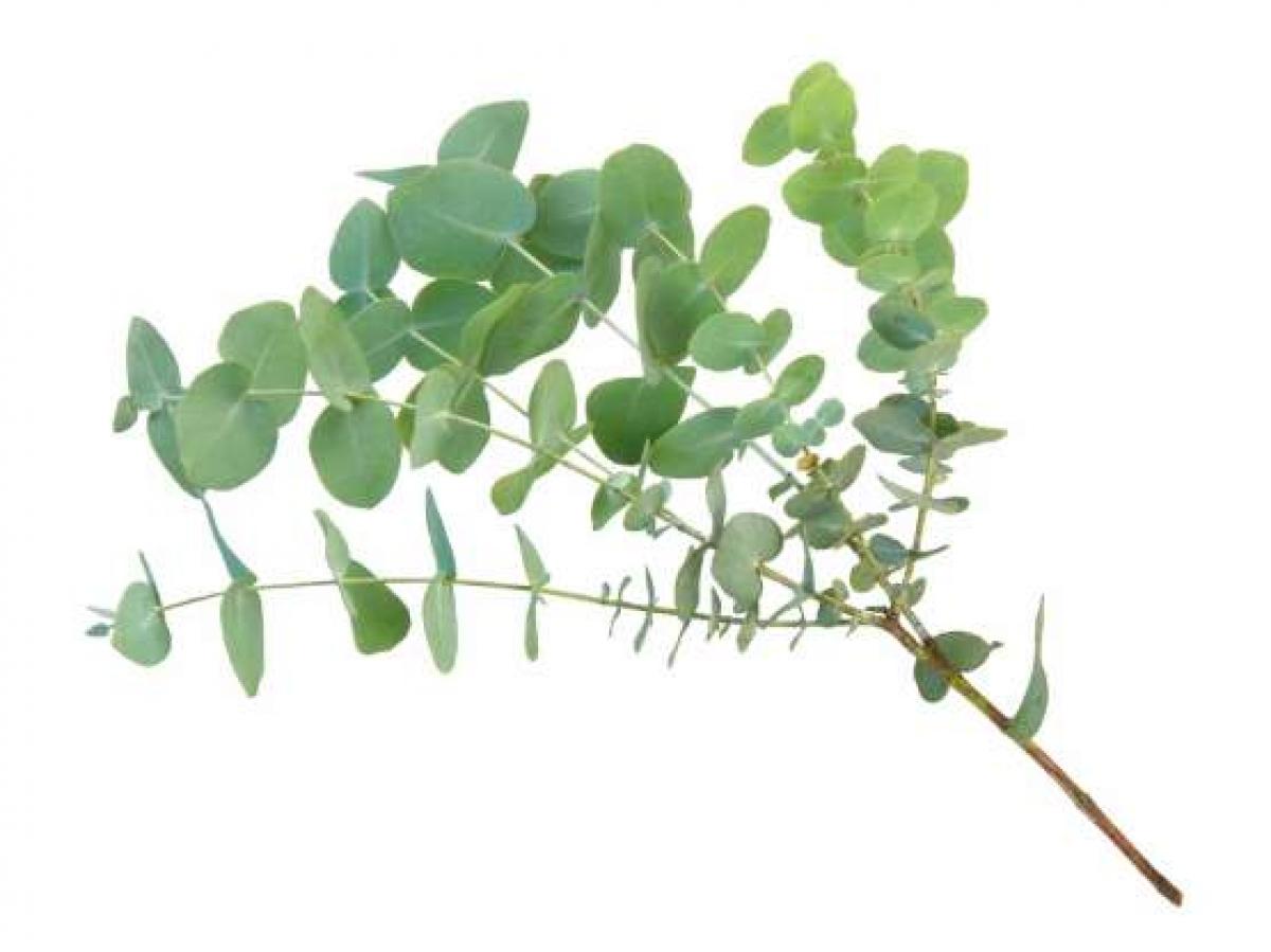 Để cầu mong sức khỏe, nhiều người cho rằng, vào sáng 31/12, bạn nên tắm bằng nước chứa các loại thảo dược để có một năm mới khỏe mạnh.