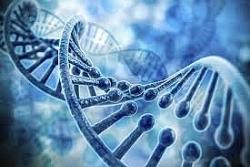 Tìm ra liệu pháp gen mới giúp kéo dài tuổi thọ tới 25%