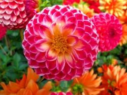 Khám phá ý nghĩa của các loài hoa