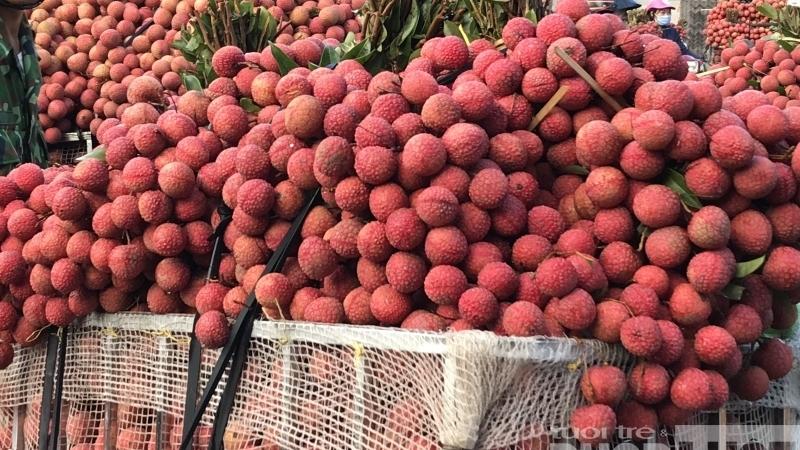 """Bắc Giang cần một hành lang """"xanh"""" để vận chuyển nông sản đi tiêu thụ"""