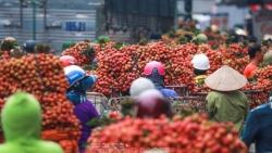 Bắc Giang: Hết 30/6, doanh thu từ vải thiều ước đạt trên 6.700 tỷ đồng