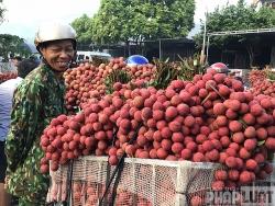 Vụ vải thiều 2020: Bắc Giang đạt doanh thu kỷ lục gần 7.000 tỷ đồng