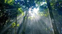 Vườn quốc gia Ba Vì: Điểm đến hấp dẫn cho những kỳ nghỉ lễ