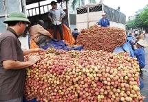 Đại thắng vụ vải thiều 2019, tỉnh Bắc Giang thu về 6.365 tỷ đồng