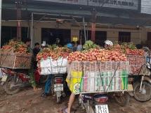 Bắc Giang dự kiến thu về 6.300 tỷ từ trái vải thiều