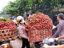 Bắc Giang phá kỷ lục doanh thu từ vụ vải thiều năm 2019