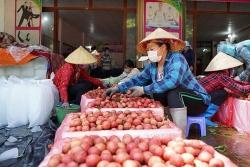 Bắc Giang: Huyện Lục Ngạn đã tiêu thụ được 12.302 tấn vải thiều