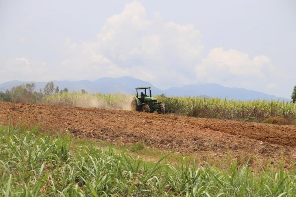 Với sự đồng hành của công ty Vietsugar, gia đình chị Nguyễn Thị Ngọc Hương, xã Ninh Quang, Ninh Hoà nhiều năm nay đã chuyển sang cơ giới hoá khâu làm đất, trồng mía, bón phân, làm cỏ