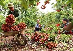 """Thủ tướng yêu cầu kịp thời gỡ """"tắc"""" tiêu thụ nông sản cho Bắc Giang"""