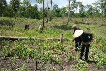 Thủ tục và quy trình đăng ký cấp giấy chứng nhận quyền sử dụng đất