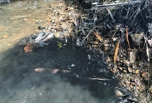 Vụ đổ dầu thải vào nguồn nước: Bộ TN&MT đề nghị xử lý nghiêm!