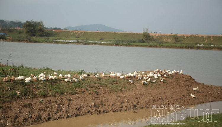 Bắc Ninh chi hơn 25 tỷ mua vắc xin, hóa chất để chống dịch bệnh cho gia súc, gia cầm