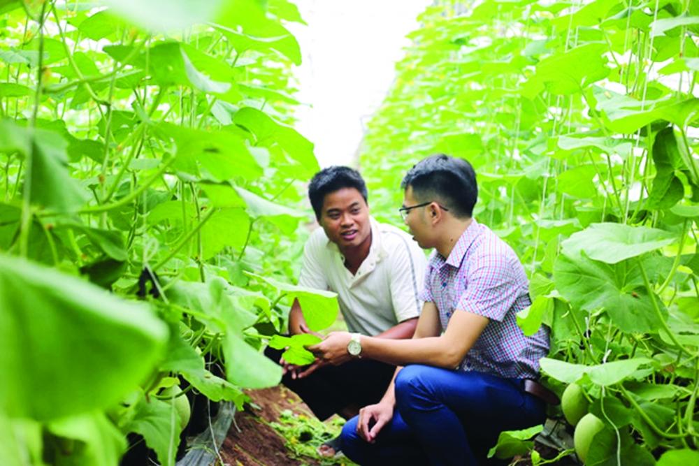 Ứng Hòa: Tập trung xây dựng vùng sản xuất trong điểm, nông nghiệp sinh thái, công nghệ cao