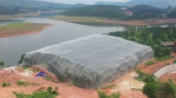 """Lục Ngạn - Bắc Giang: Vải thiều """"mắc màn"""" có giá lên tới 40.000 đồng/kg"""