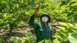Bắc Giang: Sản vật nông nghiệp bên sông Lục - núi Huyền