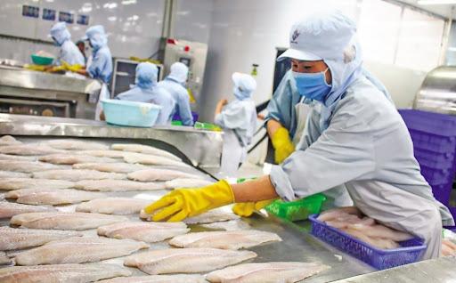 Kim ngạch xuất khẩu thủy sản vẫn tăng do sự chủ động chuyển dịch cơ cấu