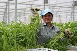 Chính phủ ban hành Chỉ thị tháo gỡ khó khăn cho việc tiêu thụ, xuất khẩu nông sản