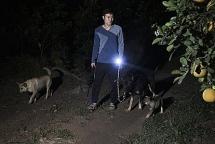 """Người trồng bưởi Diễn dắt chó """"đi tuần"""" suốt đêm chống trộm dịp giáp Tết"""