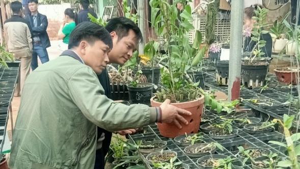 Mô hình trồng lan rừng của anh ngày càng được nhiều người biết tới