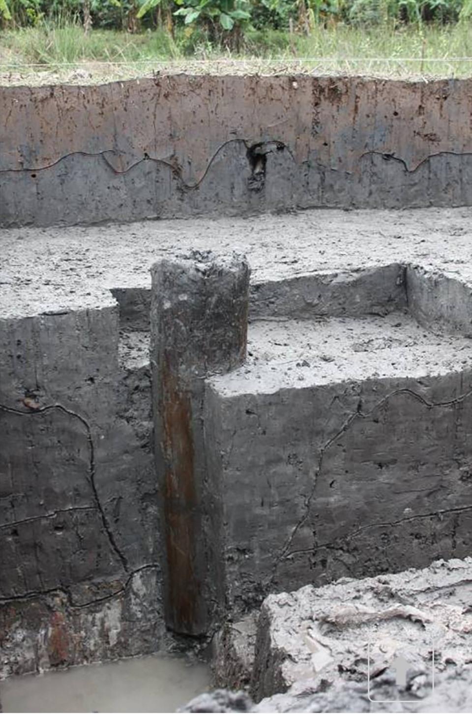Một cây cọc cổ được khai quật tại đầm Lải, xã Yên Đức năm 2017. Ảnh tư liệu Bảo tàng Quảng Ninh
